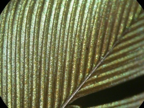 feather zipper