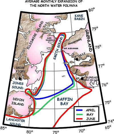 one of the most important Arctic polynyas, the Great ..., expands + contracts annually